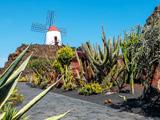 Cactustuin in Lanzarote met molen